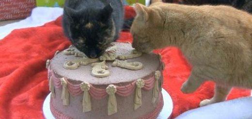 めでたさに思わず猫もかぶりつく、猫専用のクリスマスケーキ