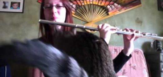 演奏中止を使命にする猫、フルート吹いたら押さえにかかり