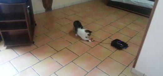 大掃除と猫の遊びを一挙に解決、床掃除ロボの新たなる可能性