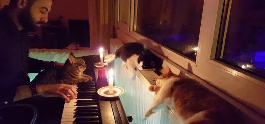 飼い主のピアノの音色に聞き惚れる猫、3匹揃って仲良く寝落ち