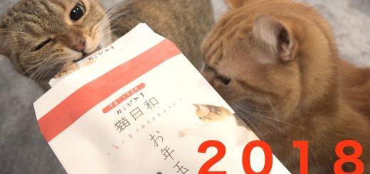 猫も欲しがるお年玉、開封前からポチ袋に殺到