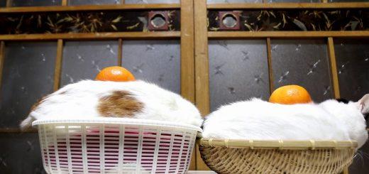 ふんわりもちもち猫鏡餅、鏡開きを待たずに自動で開く