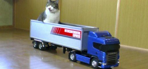 ラジコンのトレーラーに運ばれる猫、停車するまでおとなしく