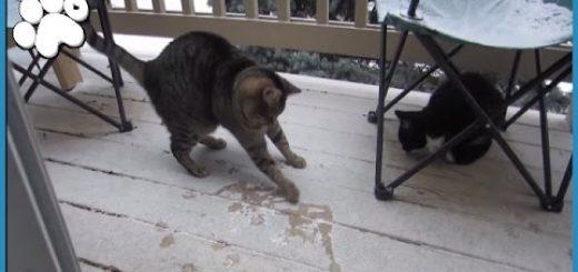 初めての雪にエキサイトする猫、雪に負けじと自らが舞い