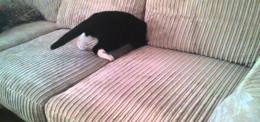 ソファの隙間に吸い込まれる猫、足もシッポもピンと伸ばして