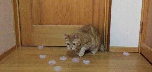 ほぼ100%の防御率、猫のキーパーファインセーブを連発