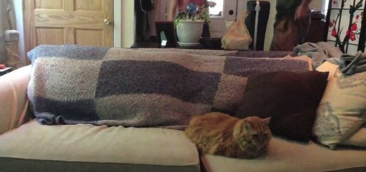 ドッキリの仕掛け役に参加する猫、何食わぬ顔で成功に導く