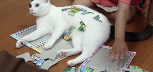 パズルの上に載ったつもりが、ピースを積まれてやや驚く猫