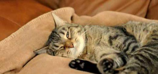 夢の中で敵と戦うキジトラ猫、威嚇をするも姿は見えず