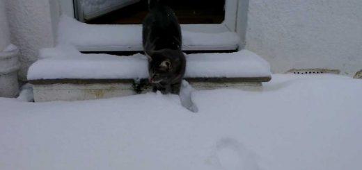 初めての雪絨毯に興奮する猫、全力で喜び外駆け回る