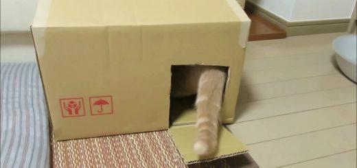 側面に穴を一つ開ければ完成、段ボール製シンプル猫ホイホイ