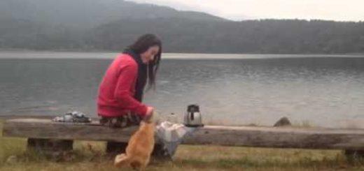 お茶淹れてお池の畔でピクニック、いつの間にやら猫が隣に