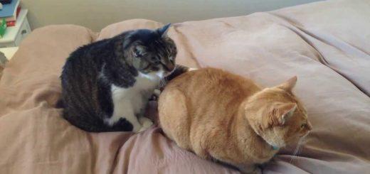 茶トラが座るところに座りたい猫、ソフトな督促あえなく失敗