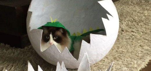 卵から生まれて飛び出て駆ける猫、恐竜コスプレ身にまとい