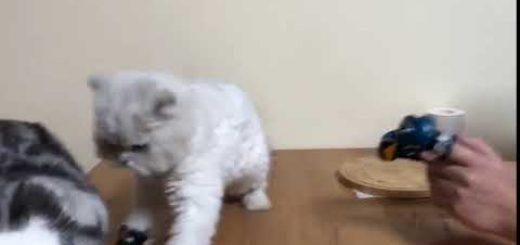 飼い主のパンチで空気を読んだ猫、傍らの猫はとばっちりを食う