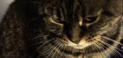 一面のお金の海に転げる猫、顔から滲むアイラブマネー