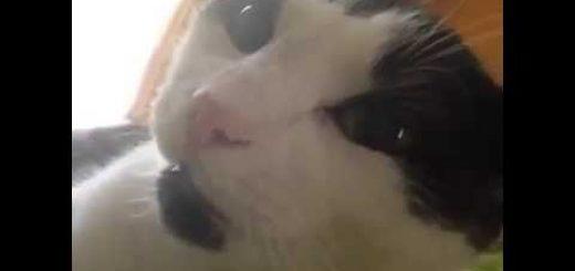 飼い主のアイラブユーとの声かけに、アイラブユーで答える猫