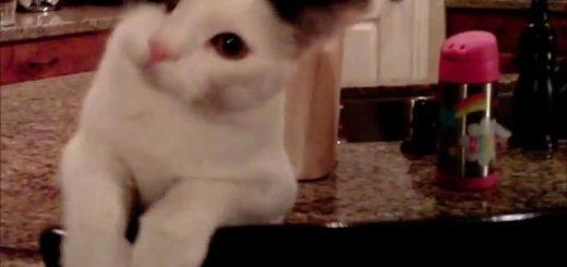 白黒の猫の怒りを買ったドローン、撃墜の様を克明に記録