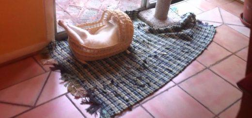 ベビーベッドで熟睡する猫、予想を裏切る大胆な寝相で