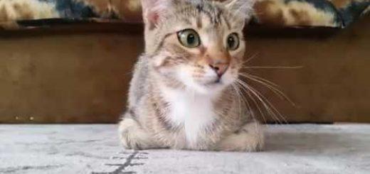 ホラー映画に見入る猫、その不穏な動きで恐怖を伝える
