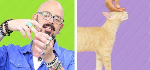 正しい猫の撫で方は、名画「アダムの創造」を参考に