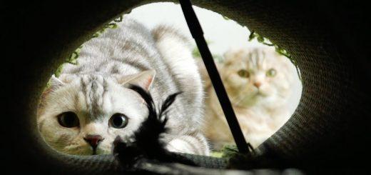 ラグと机で猫専用トンネルを簡易作成、使われ方は予想の通りに