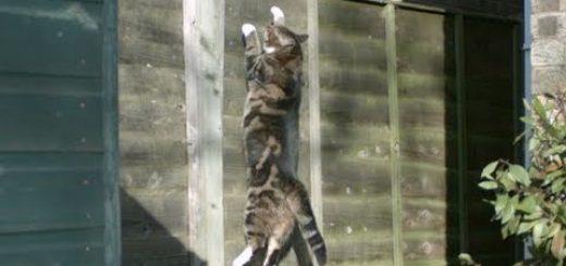 猫の身体能力の高さを見せつける、スローモーション大ジャンプ