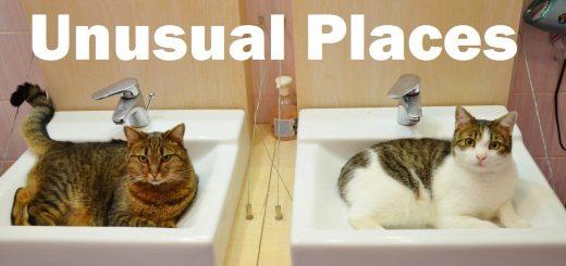 言われてみればいつの間にやらここにいる、猫がよくいるあの場所10選