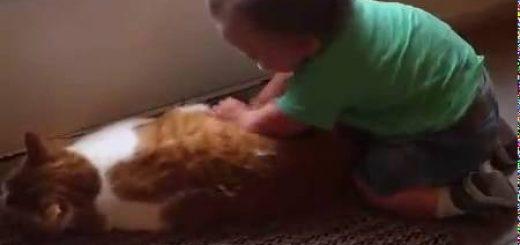 産まれ来る未来の家族を肉球で、押して押されて押して返す猫