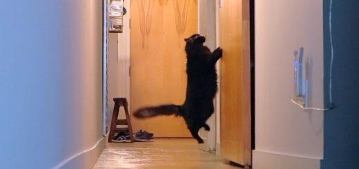 世の中には2種類の猫がいる、扉が開くまで鳴く猫と開いた後から鳴く猫と