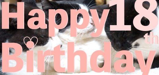 3匹の猫の兄妹誕生日、そろって仲良く18歳に