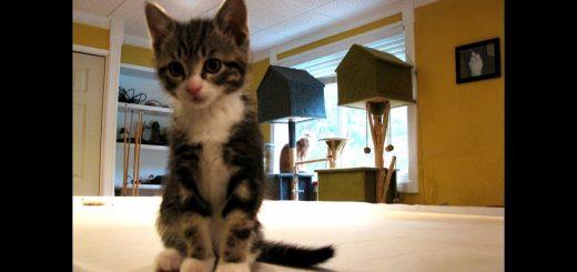 ご飯に掛け出す猫の小走り、4週間おき定点観測
