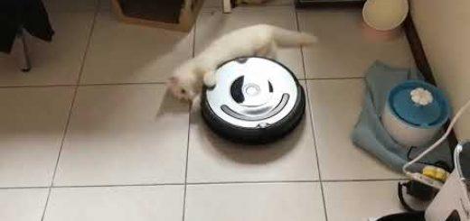 公式の付属品レベルの適合力、ルンバに掴まり回転する猫