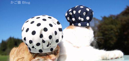 ZOZOスーツっぽい水玉模様の猫帽子、風に吹かれてコロリと転がる