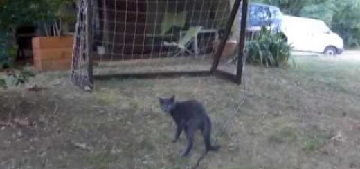 闘志をあわらに猫キーパー、体を張って好セーブを連発