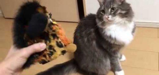 初対面同士のファービーと猫、胸に抱いて添い寝する仲に