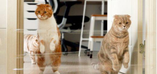 猫と人との運動不足の解消に、透明テープでジャンプを誘発