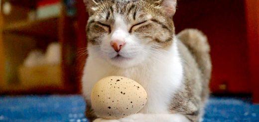 心静かに微動だにせず瞑想する猫、煩悩に揺れて卵は転げて