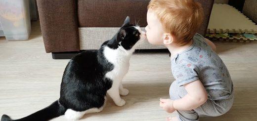 新生児への猫英才教育成功事例、適度な加減で猫と触れあい