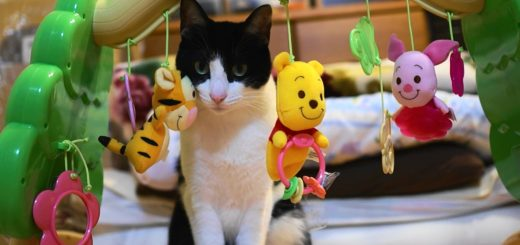 赤子用のジム型メリーに一工夫、セロハンテープで猫のオモチャ化
