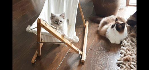 4か月かけて覚えたあの技を、後輩が一瞬で覚えて困惑する猫