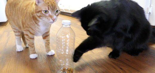 猫の飼い主にしか役に立たない、5つのライフハック