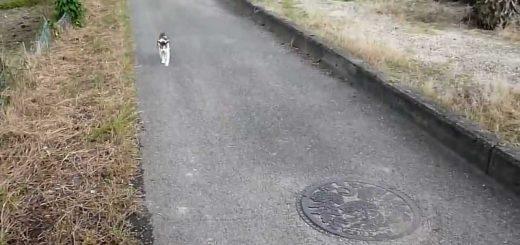婆ちゃんの後追う夏の散歩道、てくてくゆらゆら猫は歩むよ