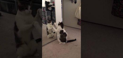 気の合う動きで見つめ合う猫、シンクロする謎のダンスを披露