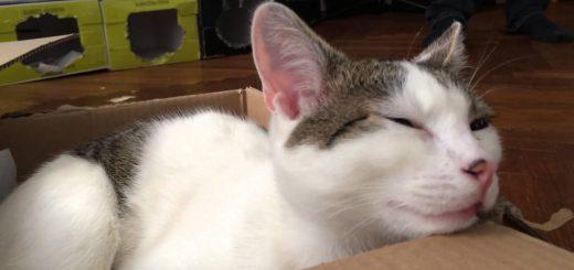 ボロンと弾いた弦の音、猫は律儀に合いの手返す