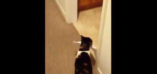 プリンタの紙に興味津々な猫、まとめて咥えて飼い主へ運ぶ
