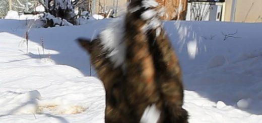 サビ猫受けるよ千本ノック、雪の白球追いかけて