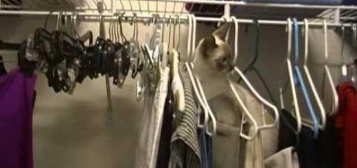 飼い猫の室内行方不明事案、アクロバティックなその一部始終