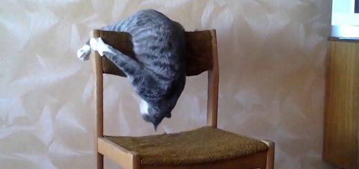 アクロバティック猫新体操、高難易度を連続で決める