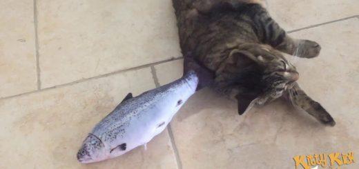 我が物と猫は離さぬ生魚、にしか見えない抱き枕